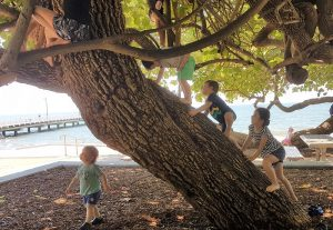 Climbing tree at Shorncliffe